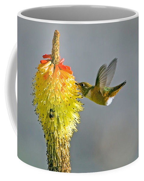 Hummingbird Coffee Mug featuring the photograph Birds And Bees by Mike Dawson