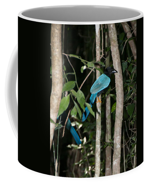 Mexico Quintana Roo Coffee Mug featuring the digital art Birds From Coba by Carol Ailles