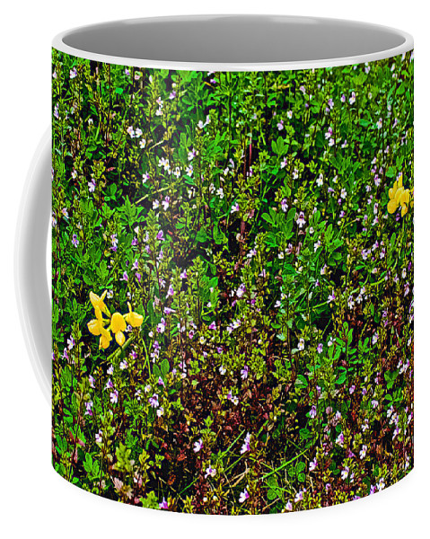 Birdsfoot Trefoil Surrounded By Tiny Bright Eyes In Campground In Saginaw Coffee Mug featuring the photograph Birdsfoot Trefoil Surrounded By Tiny Bright Eyes In Campground In Saginaw-minnesota by Ruth Hager