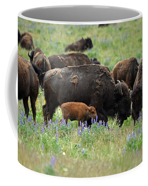 Lupine Coffee Mug featuring the photograph Bison And Lupine by Whispering Peaks Photography