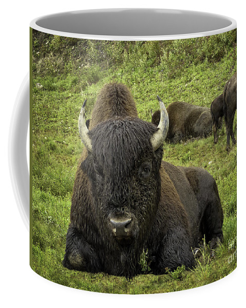 Wood Bison Coffee Mug featuring the photograph Bison Bliss by Teresa A and Preston S Cole Photography