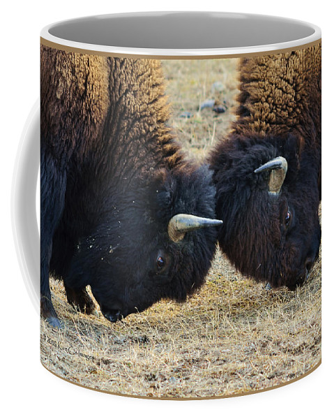 Bison Coffee Mug featuring the photograph Bison Push And Shove by Kae Cheatham
