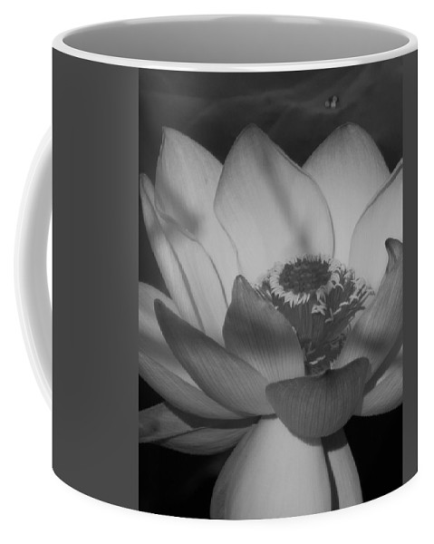 Kenilworth Park & Aquatic Gardens Coffee Mug featuring the photograph Black And White Lotus In Full Bloom by Rande Cady