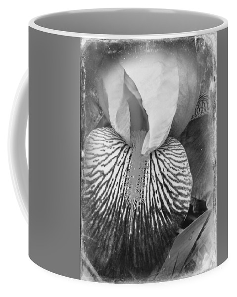 Striated Coffee Mug featuring the photograph Black And White Orchid by Kathy Barney