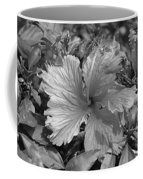 Black And White Coffee Mug featuring the photograph Black And White by Rob Hans
