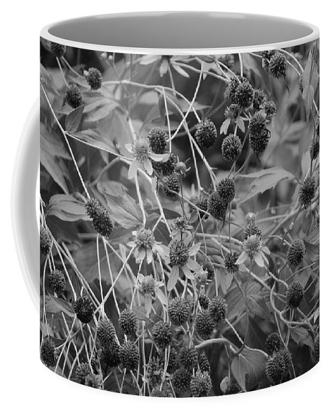 Black And White Coffee Mug featuring the photograph Black And White Sun Flowers by Rob Hans