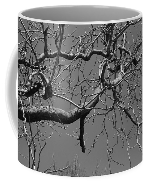 Sky Coffee Mug featuring the photograph Black And White Tree Branch by Rob Hans