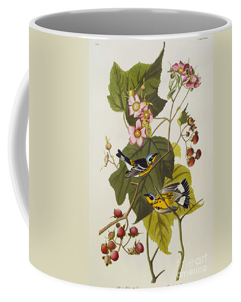 Black And Yellow Warbler. Magnolia Warbler (dendroica Magnolia) Plate Cxxiii From 'the Birds Of America' (aquatint & Engraving With Hand-colouring) By John James Audubon (1785-1851) Coffee Mug featuring the drawing Black And Yellow Warbler by John James Audubon