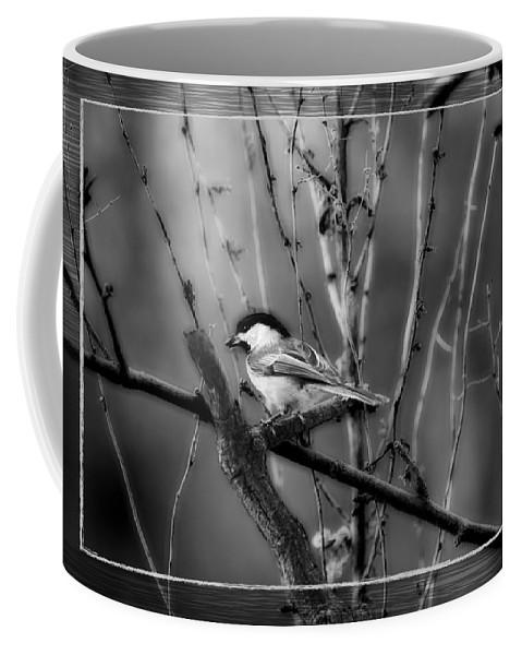Black Capped Chickadee Coffee Mug featuring the photograph Black Capped Chickadee by Michael Tucker