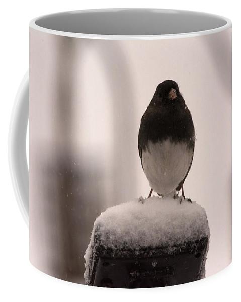 Black Eyed Junco Coffee Mug featuring the photograph Black Eyed by Linda Kerkau