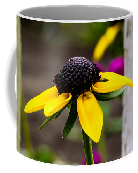 Black Eyed Susan Coffee Mug featuring the photograph Black Eyed Susan Delight by Crissy Anderson