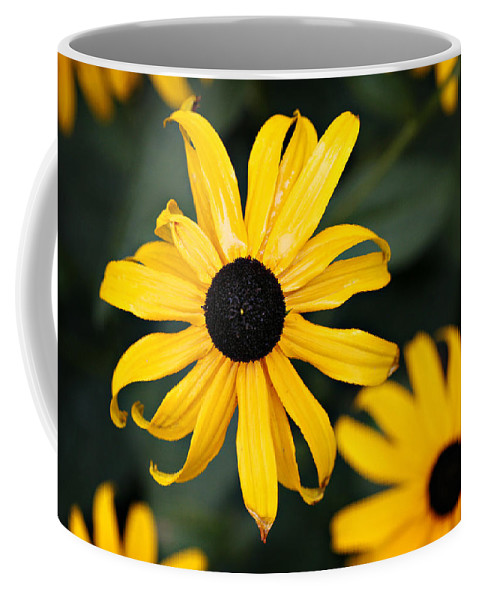 Black Eyed Susan Coffee Mug featuring the photograph Black Eyed Susan by Marilyn Hunt