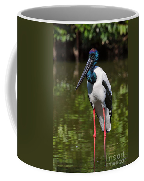 Birds Coffee Mug featuring the photograph Black-necked Stork by Louise Heusinkveld
