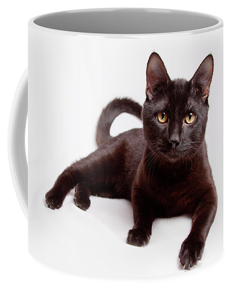 Animals Coffee Mug featuring the photograph Black On White by Sue Collura