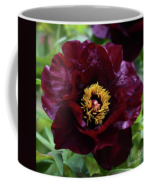 Peony Coffee Mug featuring the photograph Black Pirate 2121 by Terri Winkler