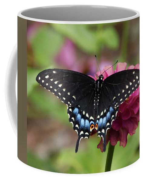 Black Swallowtail Coffee Mug featuring the photograph Black Swallowtail by Eric Noa