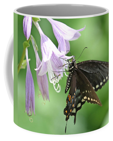 Nature Coffee Mug featuring the photograph Black Swallowtail by Mike Dickie