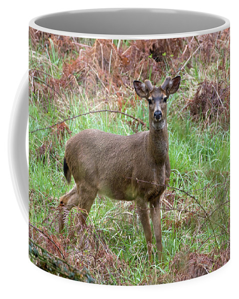 Animal Coffee Mug featuring the photograph Black-tailed Buck Growing Antlers - Western Oregon by Randall Ingalls