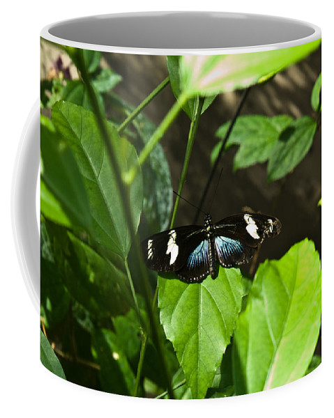 Black Coffee Mug featuring the photograph Black Tropical Butterfly by Douglas Barnett
