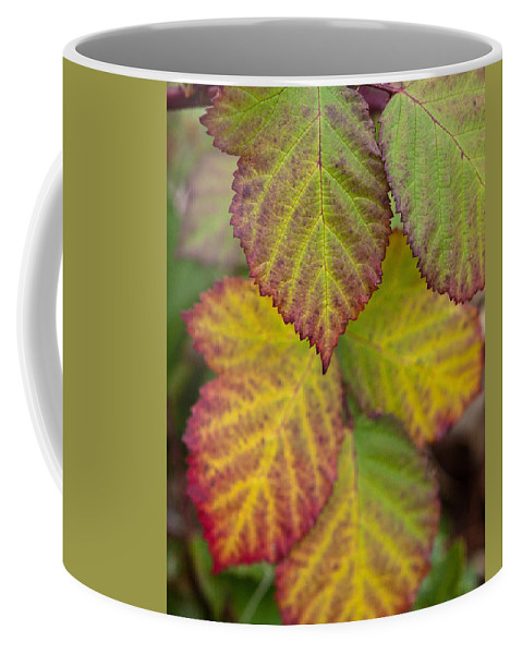 Leaves Coffee Mug featuring the photograph Blackberry Autumn by Denise Dethlefsen