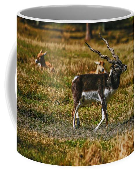 Florida Coffee Mug featuring the photograph Blackbuck by Mark Fuge