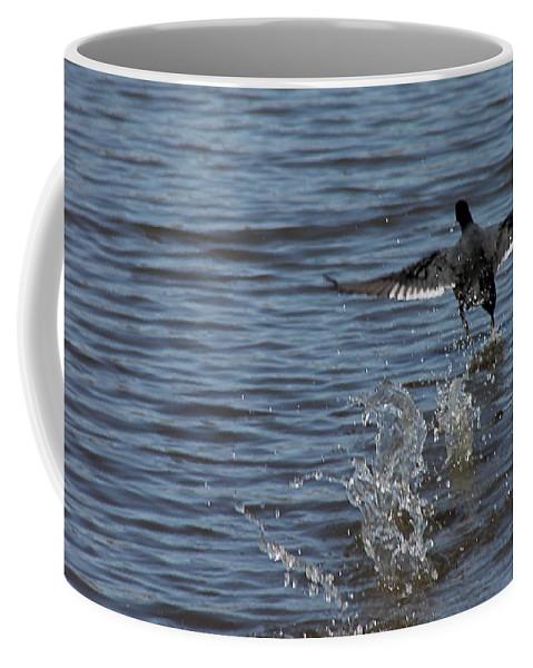 Ducks Coffee Mug featuring the photograph Blackduck Takeoff Run by Wayne Williams