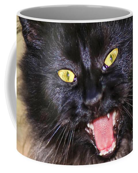 Black Cat Coffee Mug featuring the photograph Blackie by Geraldine DeBoer