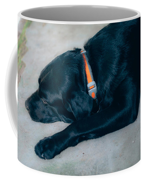 Black Dog Coffee Mug featuring the photograph Blackiecharlie 1 by Totto Ponce