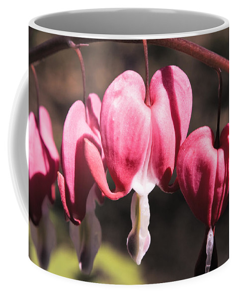 Bleeding Coffee Mug featuring the photograph Bleeding Hearts by Teresa Mucha