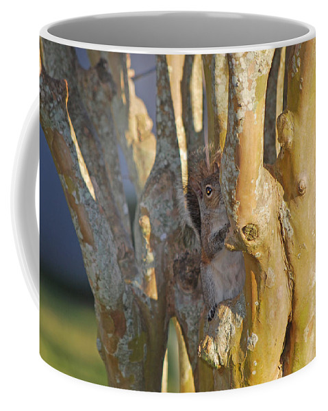 Squirrel Coffee Mug featuring the photograph Blending In by Adele Moscaritolo