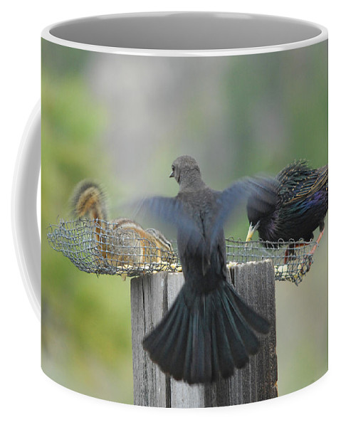 Bird Coffee Mug featuring the photograph Bless This Meal by Donna Blackhall
