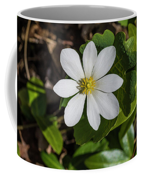 Blood Coffee Mug featuring the photograph Blood Root Or Blood Wort by Bob Corson
