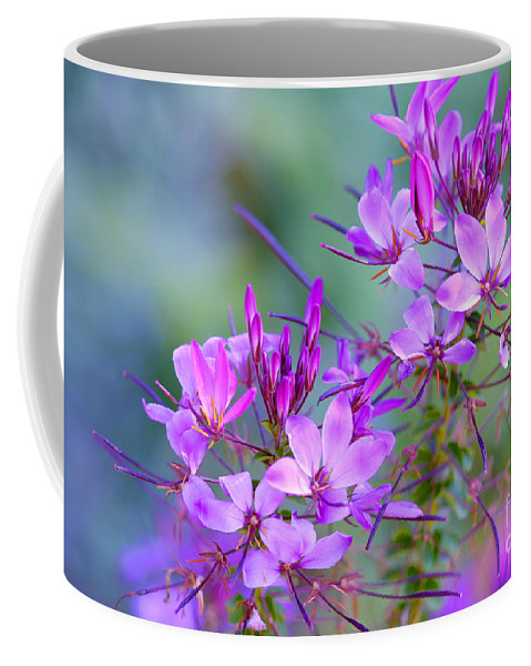 Flower Coffee Mug featuring the photograph Blooming Phlox by Alana Ranney