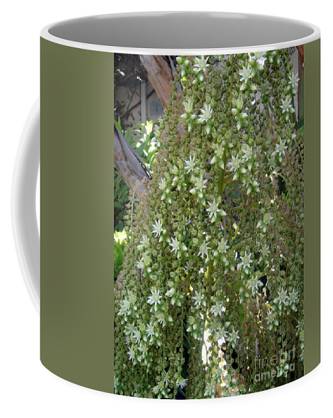 Bloom Coffee Mug featuring the photograph Blooming Succulent Plant. Big And Beautiful by Sofia Metal Queen