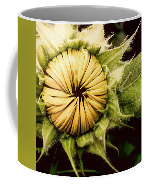 Sunflower Coffee Mug featuring the photograph Blooming Sunflower by Chuck Hatcher