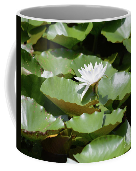 Blooming Waterlily Coffee Mug featuring the photograph Blooming Waterlily by Ruth Housley