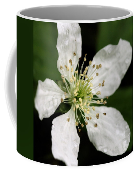 Flower Coffee Mug featuring the photograph Blossom Square by Angela Rath