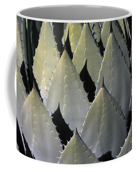Cactus Coffee Mug featuring the photograph Blue Agave Cactus by Sandra Bronstein