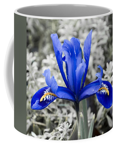 Blue Coffee Mug featuring the photograph Blue Along by Svetlana Sewell