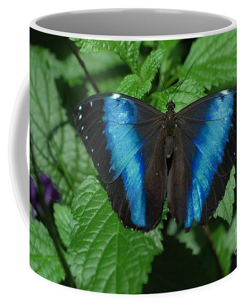 Blue Coffee Mug featuring the photograph Blue And Black by Kathleen Struckle