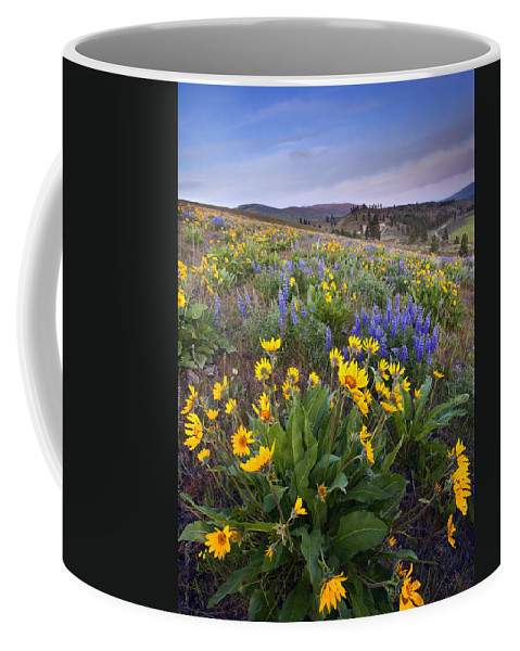 Lupine Coffee Mug featuring the photograph Blue And Gold by Mike Dawson