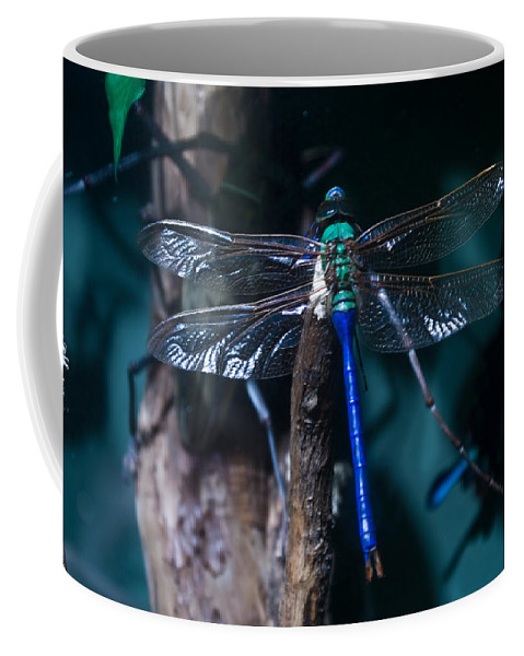 Blue Coffee Mug featuring the photograph Blue And Green Dragonfly by Douglas Barnett
