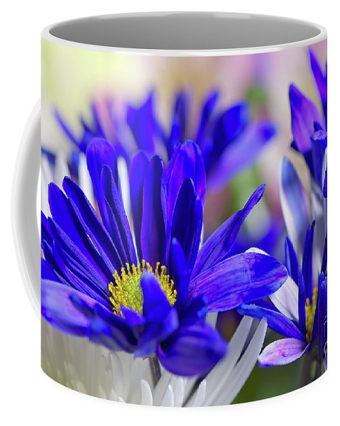 Blue And White Coffee Mug featuring the photograph Blue And White by Sharon Talson