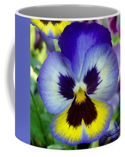 Flowers Coffee Mug featuring the photograph Blue And Yellow Pansy by Nancy Mueller