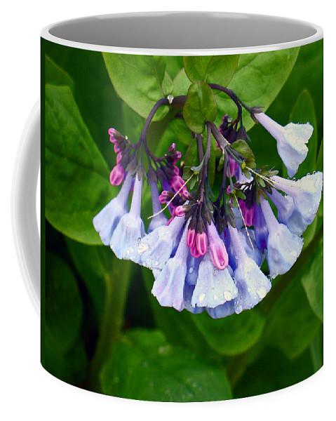Native Landscape Coffee Mug featuring the photograph Blue Bells by Steve Karol