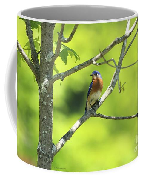 Bluebird Coffee Mug featuring the photograph Blue Bird by Deborah Benoit