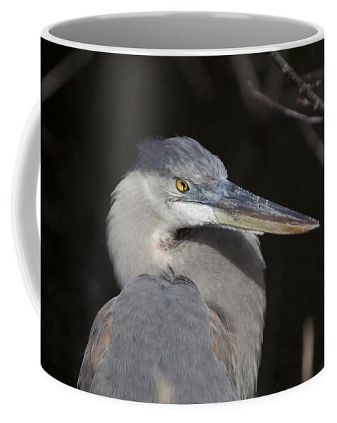 Animal Coffee Mug featuring the photograph Blue Bird by Jon Glaser