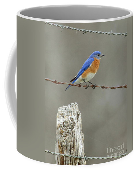 Wildlife Coffee Mug featuring the photograph Blue Bird On Barbed Wire by Robert Frederick