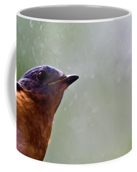 Blue Coffee Mug featuring the photograph Blue Bird Up Close by Douglas Barnett