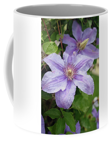 Clematis Coffee Mug featuring the photograph Blue Clematis by Margie Wildblood